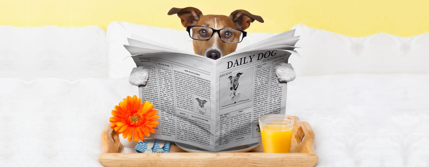 daily-dog
